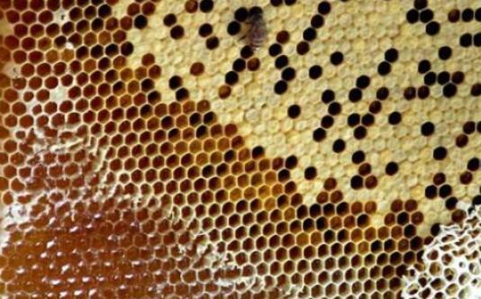 土蜂蜜保质期有多久?
