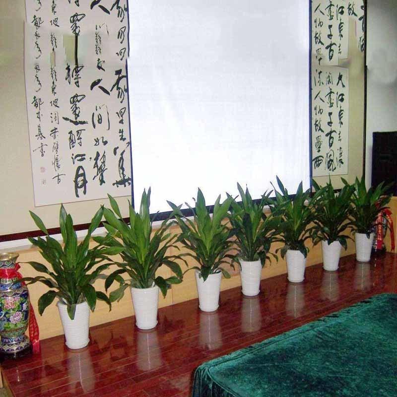 办公室盆栽花卉租赁