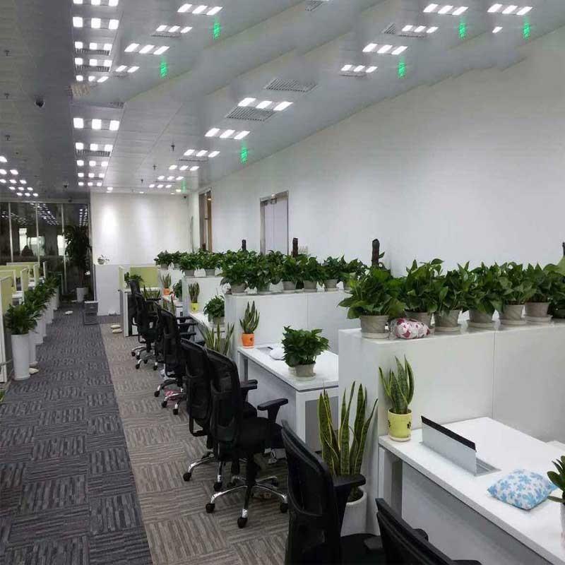 写字楼办公室花卉租赁