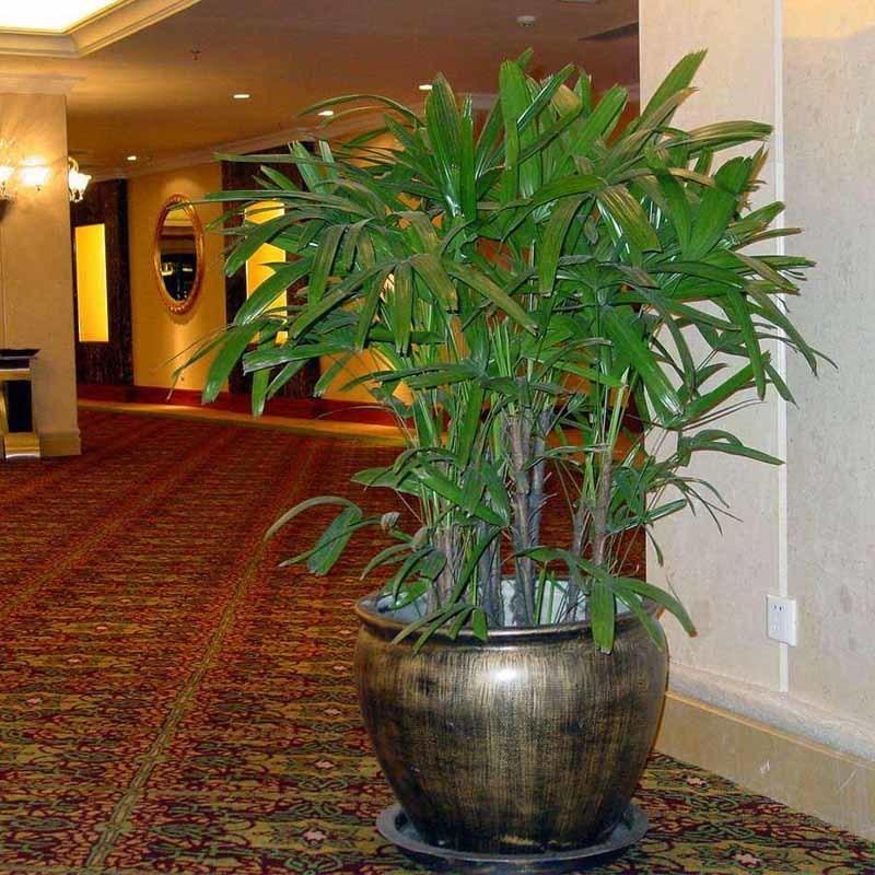 成都宾馆植物租摆