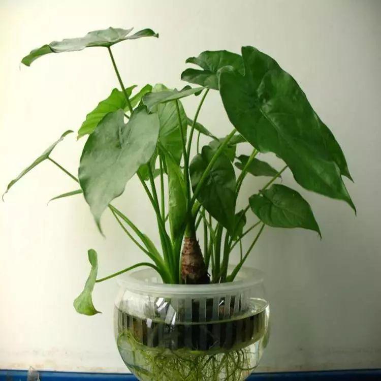 阳台植物摆放品种技巧
