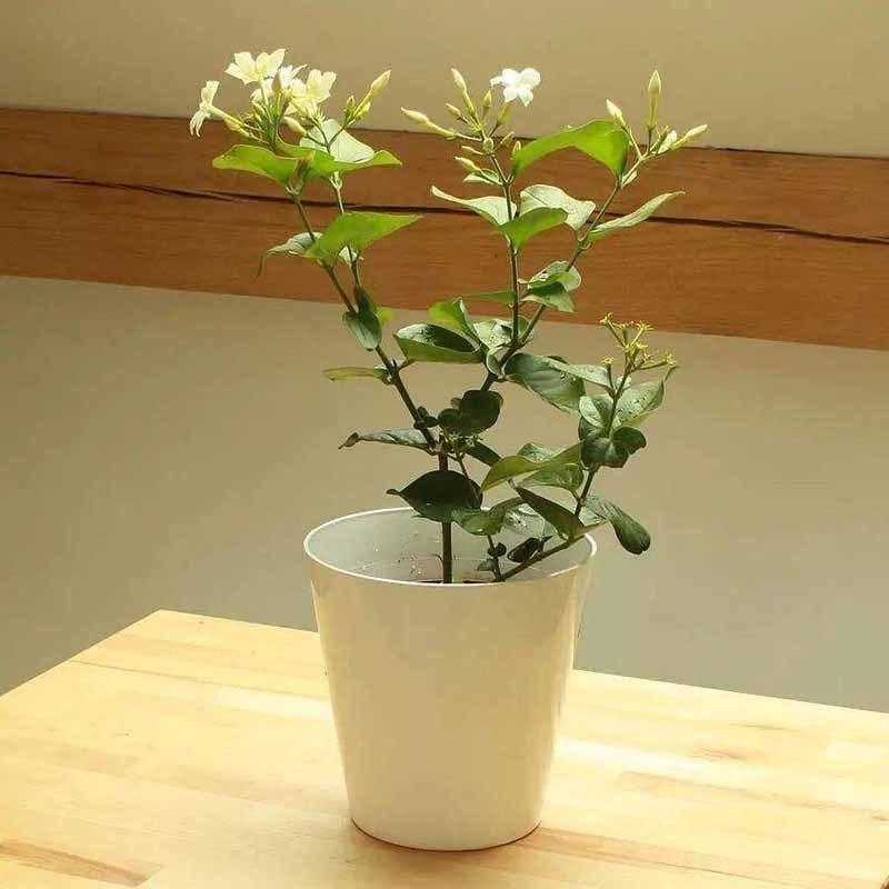 办公室植物租摆方案介绍