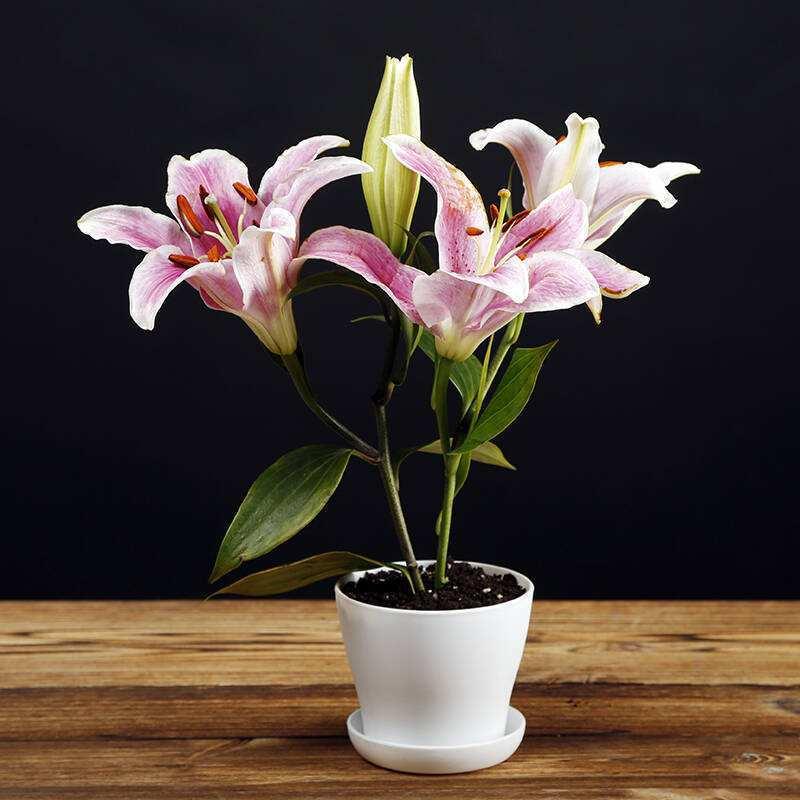成都花卉租赁分享室内盆栽浇水技巧