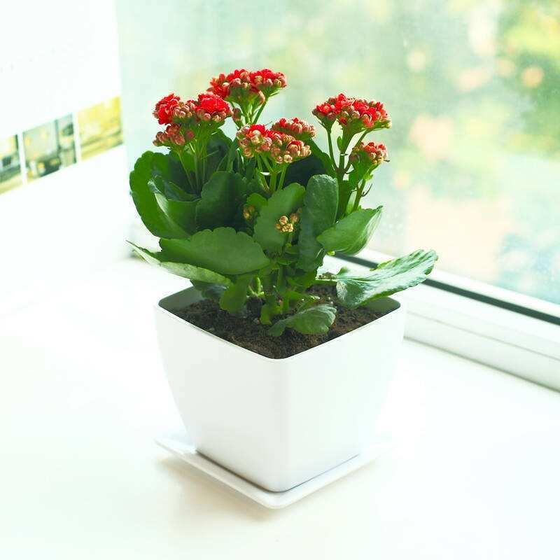 成都植物租摆公司植物租摆有哪些优势
