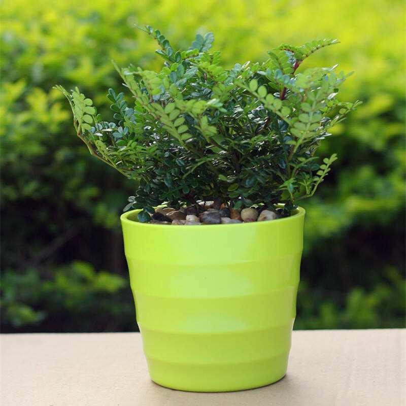 成都植物租摆清香木摆放