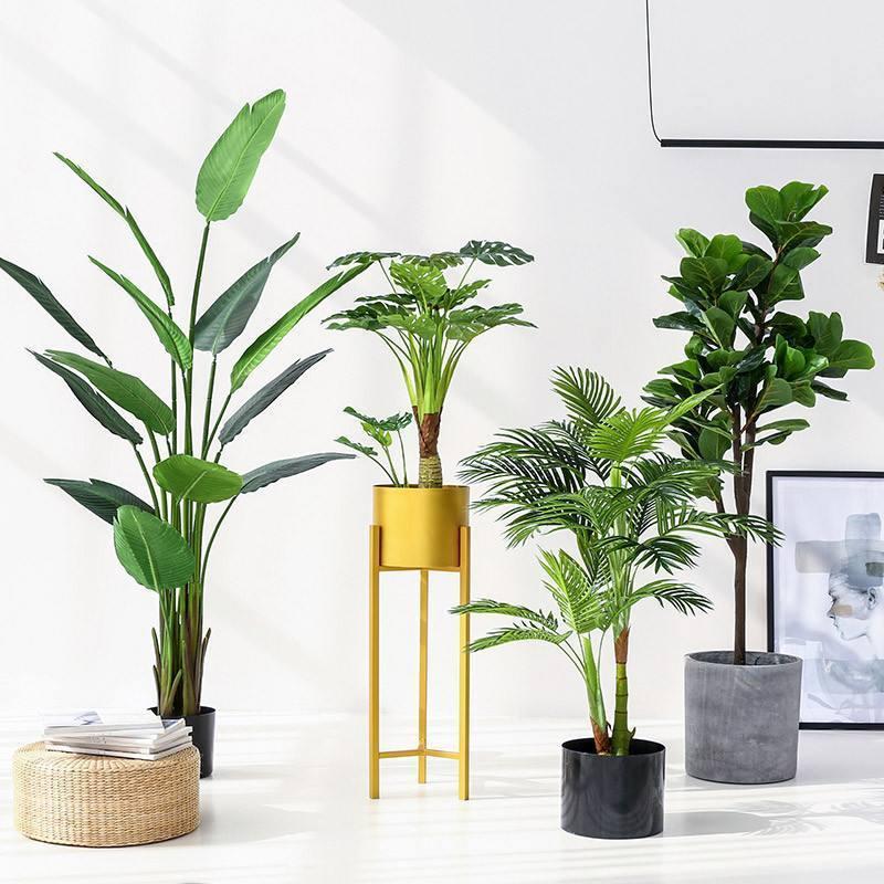 家庭植物摆放的几种风水考虑