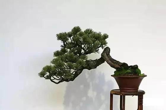 成都老板办公室植物摆放推荐品种