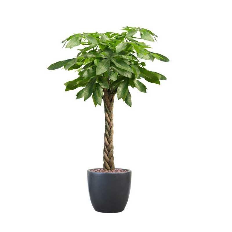 怎么做好盆栽的冬季选择与养护