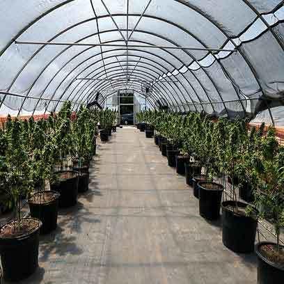 Large Plastic Alibaba Plant Pots Wholesale