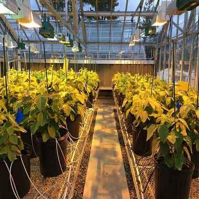Buy Wholesale New Plastic Pots For Plants