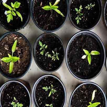 Bulk Buy Of Large Plastic Plant Pots