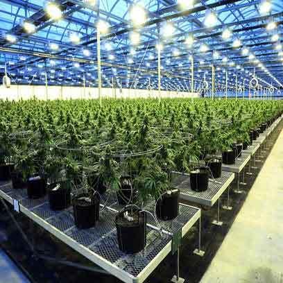 Plastic Seedlings Plants Nursery Pots Supplier