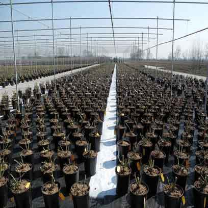 Wholesale Gallon Nursery Pots Canada