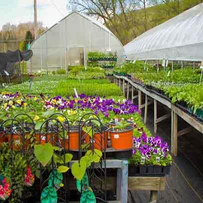 Bulk Plastic Nursery Flower Pots Suppliers USA