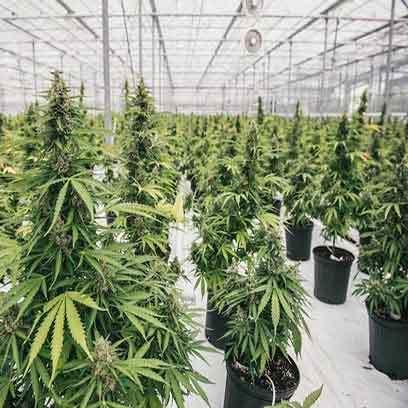 Agriculture Plastic Plant Pots Wholesale Supplier