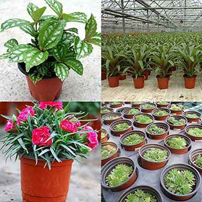 Cheap Small Plastic Plant Pots Wholesale