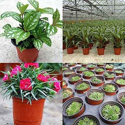 Cheap Small Plastic Plant Pots Wholesale Czech