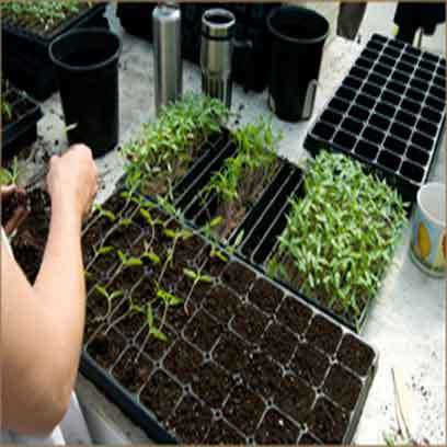 Cheap Greenhouse Pots And Trays Supplier