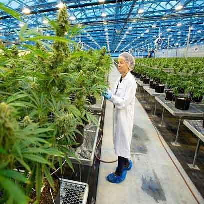 1 2 Gallon Nursery Pots Wholesale Supplier Canada
