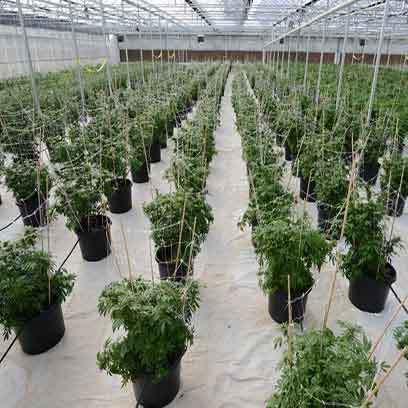 Premiem 5 Gallon Pots Wholesale Supplier