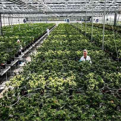 Cheap Greenhouse Supplies Pots Wholesale