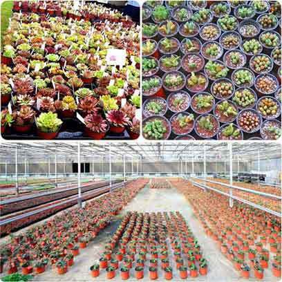 Cactus Plastic Nursery Pots Wholesale Price USA