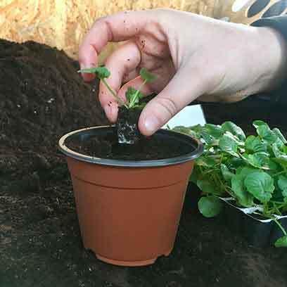 Mini Plastic Plant Pots Wholesale Supplier