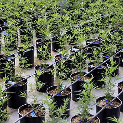 Large Black Nursery Pots Wholesale Suppliers Florida