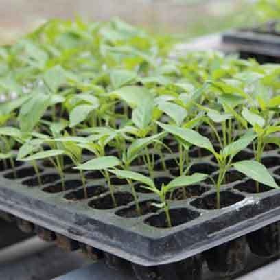 Seed Propagation Trays Wholesale Suppliers Canada
