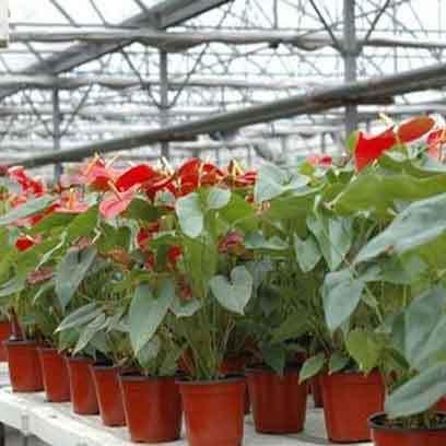 Cheap Big Plastic Plant Pots Supplier