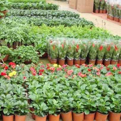 Cheap Plastic Plant Pots Wholesale UK