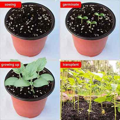 Plastic Seed Starter Pots Wholesale Supplier