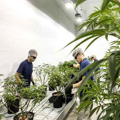 Cheap Large Plastic Nursery Pots Bulk Massachusetts