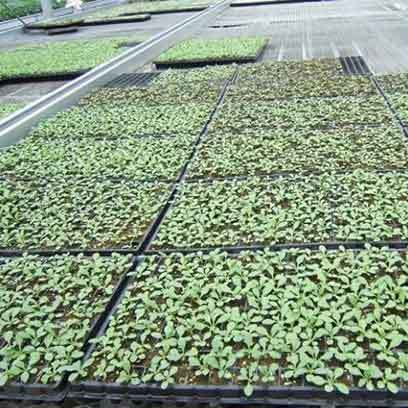 Cheap Black Planting Trays Wholesale Supplier