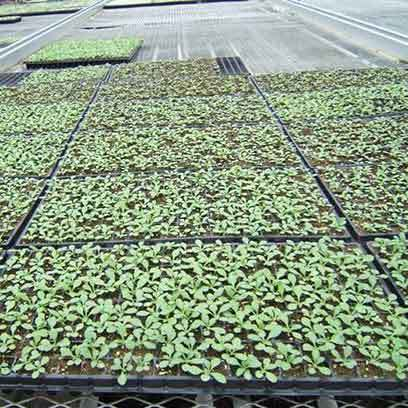 Cheap Plant Propagation Trays Wholesale Supplier