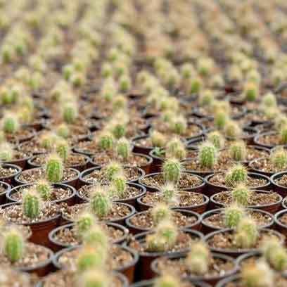 Bulk Succulent Pots For Sale Australia