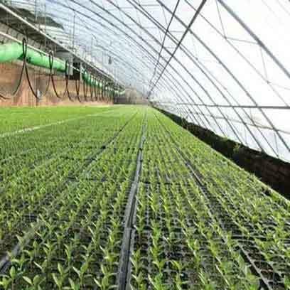 Cheap Black Plastic Plant Trays Wholesale Supplier