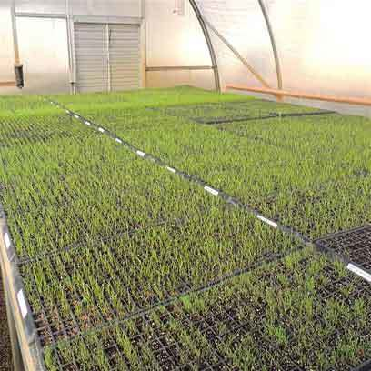 Cheap Plastic Germination Trays Wholesale Suppliers UK