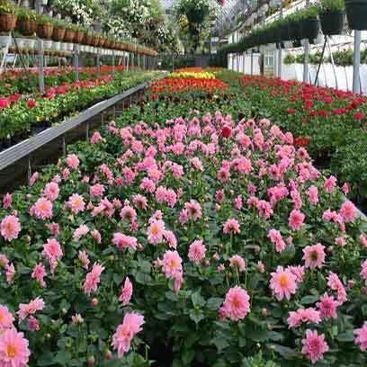 Cheap Plastic Flower Pots Wholesale Suppliers Pakistan