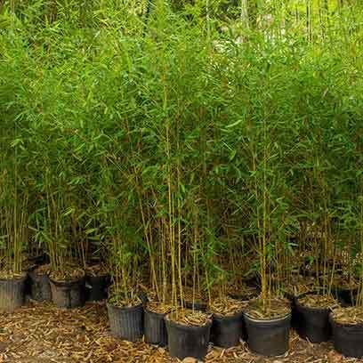 Cheap Plastic Tree Pots Wholesale Supplier
