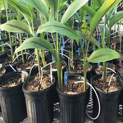 Cheap Plastic Garden Pot Manufacturers Texas