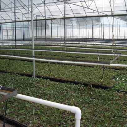 Cheap Greenhouse Plant Trays Wholesale Supplier