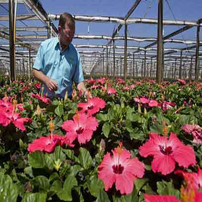 Cheap Black Gallon Flower Pots Manufacturers UK