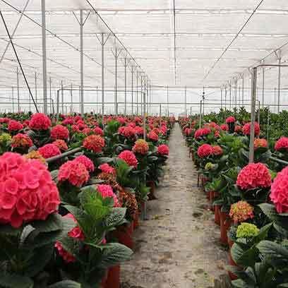 Greenhouse Plastic Flower Pots Wholesale Suppliers California