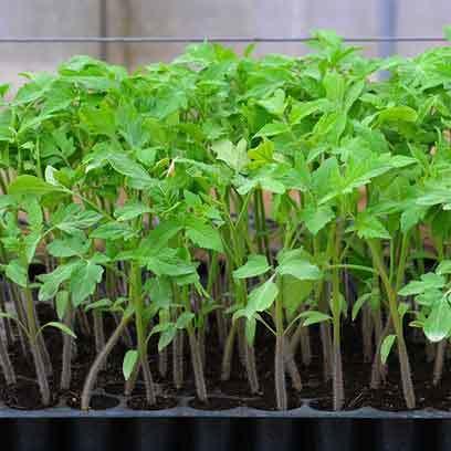 Cheap Large Plant Trays Plastic Wholesale