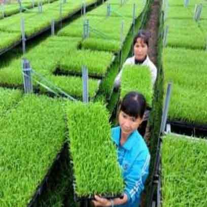 Cheap Rice Seedling Tray Supplier Philippines