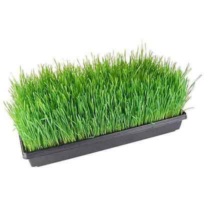 Cheap Sprout Growing Trays Wholesale Supplier