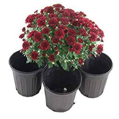 Large Black Plastic Flower Pots Wholesale Ireland
