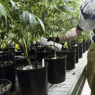 Large Plastic Plant Pots For Trees Wholesale