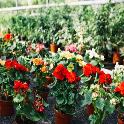 Bulk Buy Plastic Garden Pots Cheap NZ